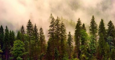 ОНФ предлагает защищать леса при помощи блокчейна